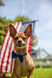 Best Friends Animal Society Helps Declare Inde-Pet-Dence Day This 4th!