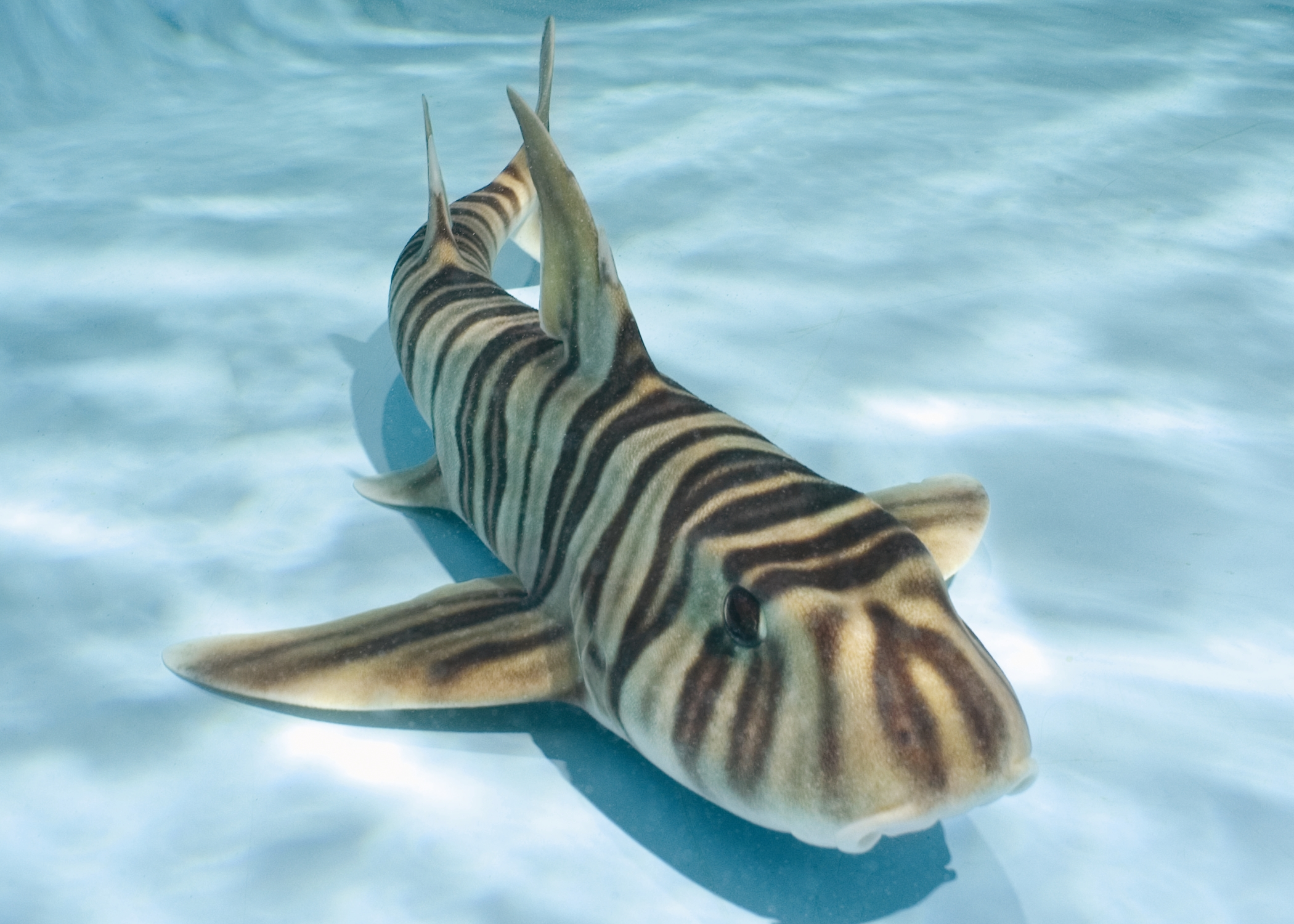 Newport Aquarium The Shark Capital Of The Midwest