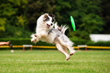 Frisbee invention works for pets too