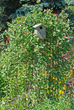 Bring in the birds with birdhouses and benefit from their diet of insects, including many garden pests and mosquitoes.