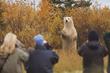 Polar bear holds court at Nanuk Polar Bear Lodge.