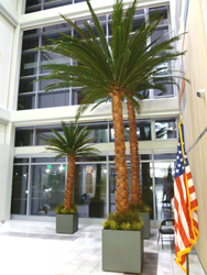 20-foot preserved palms at the entrance to the North Las Vegas VA Medical Center.