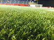 Olympic Stadium Pitch Ready for Women's World Cup Semi-Final