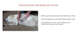 """Vital Signs Lesson from """"Dog CPR, First Aid & Safety for Pet Pros & Dedicated Owners"""""""