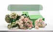 Fleurish's new Classic Romance shippable DIY Wedding Collection Fleurkit