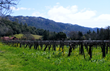McFadden's home ranch in Mendocino County's Potter Valley is exceptional for growing Sauv Blanc.