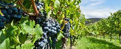Dade Moeller provides worker safety and health services, including to the viticulture industry.