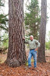 John Boutwell near large tree