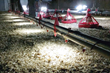 New AviLighting™ LED Poultry Light System Produces Dramatic Energy Savings