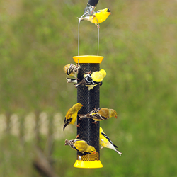 "Finches feeding at a Droll Yankees 13"" Yellow Metal Finch Sock Nyjer Feeder"