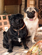 These dogs Madison and Liberty inspired the names of two new home communities built by McCaffrey Homes in Fresno, CA