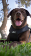 Clickit Sport is the only harness in the XL 90 lb. category to be certified by the Center for Pet Safety.