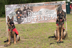 Two Fidelco German Shepherd Guides Dogs In-Training Welcome Riders