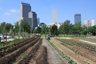 American Community Garden Association Soars To New Heights In The ...