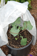 Nine Tips for Eco Friendly Pest Control in the Garden this Summer