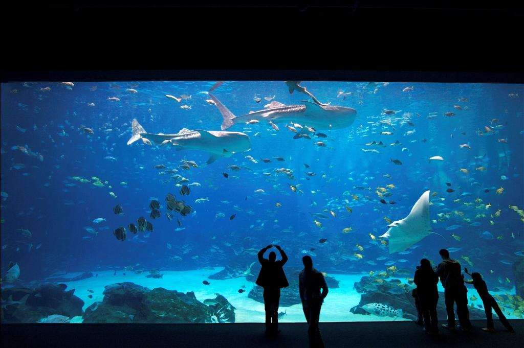 Georgia Aquarium Named Best In The U S By 2015