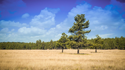 Micoley.com to Auction Off Rare Acreage Adjacent to the Apache-Sitgreaves National Forest, AZ
