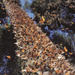 Stephen Frederick Agency and Nonprofit 'Forest For Monarchs' Announce Joint Charity Effort to Revitalize Monarch Butterfly Breeding Grounds