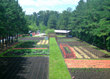 Whole Kids Foundation educational farm with beautiful Zeon Zoysia sod walkways from NG Turf