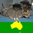 Alley Cat Rescue Calls for Boycott of Australia