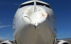 bird strikes, bird strike, bird strike damage, plane damage, goose damage, duck damage, flight strike, animal strike, runway strike, airline strike, jet liner strike