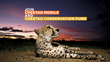 Cheetah Mobile and Cheetah Conservation Fund Release 30-Second Video PSA for #SaveTheCheetah Campaign
