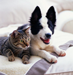 "Dallas-based Park Cities Pet Sitter to Host ""Valuable Dog & Cat Life Skills the Pros Use"" Seminar on Sunday, January 24th at Reverchon Park Community Center"