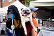 Festivals | Go Blue Ridge Travel