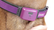 PetPace Collar Enables Intensive Health Monitoring with Minimal Handling