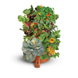 Mercola.com Introduces NEW Garden Tower and Enhanced Mineral Solution for Healthy Plants