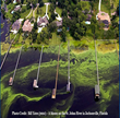 Too Much of a Good Thing: Nutrient Pollution