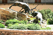 The hotel's famous bronze sculpture of sparring elk greets guests in the Antlers' at Vail's Vail, Colo., courtyard.