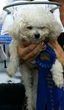 Blind dog Muffin and his winning ribbon!