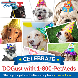 PetMeds Cares DOGust Birthday Sweepstakes