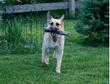 Happy Dog with Eco Fetchin' Stick