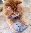 Happy Tiggs with Eco Mouser