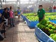Aquaponics = raising fish and vegetables for food or profit. We show you how