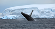A Cool New Deal on Upcoming Antarctica Tours and Antarctica Cruise Packages