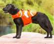Outward Hound PupSaver Fish Life Jacket