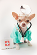 Amazing Pet Expos Shares Tips Avoid Pet Insurance Scams, Frauds & Ripoffs
