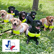 Clear Insurance Group and Nonprofit Guide Dogs of Texas Initiate New Charity Campaign in San Antonio,TX to Provide Guide Dogs for The Blind