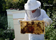 Orren Fox, 18-year-old author of Do Beekeeping: The Secret to Happy Honeybees, with his honeybees for National Honeybee Day, August 22, 2015.