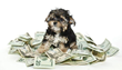 5 Cheapest States for Pet Insurance