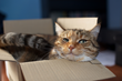 pet invention that cats will love