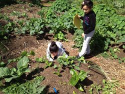 Students working on an agriculture based activity in a 2014-2015 funded project called the Collaborative Planning Project.