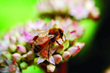 McCloud Services Joins in National Day of Service to Raise Awareness about the Importance of Protecting Pollinators