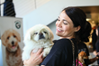 "Best Friends Animal Society Helps Beverly Hills Say ""No"" to Puppy Mills"