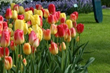 Longfield Gardens Offers All Colors of the Rainbow for Spring 2016