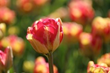 Longfield Gardens, Garden Media Group