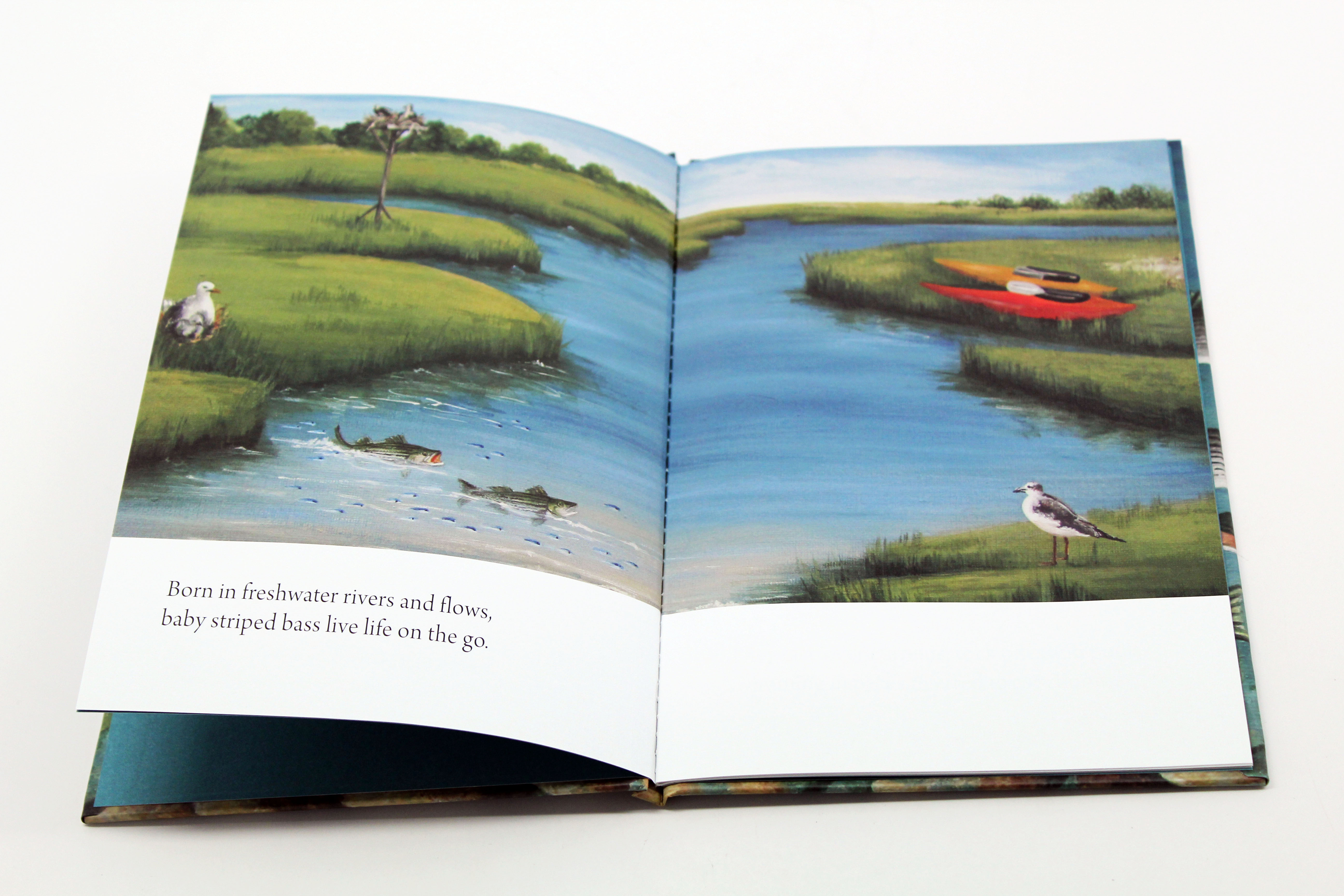 new children u0027s book explains striped bass migration educates next